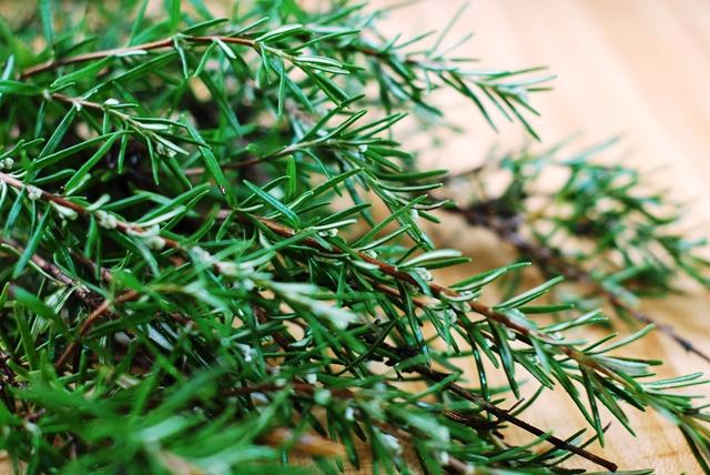 Fresh Rosemary Sprig
