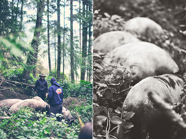 pig_in_forest_diptych1-2