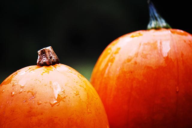 pumpkins1-2