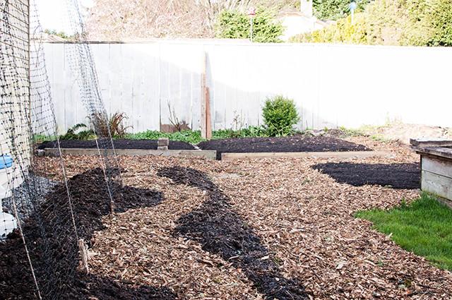pea-garden1-2